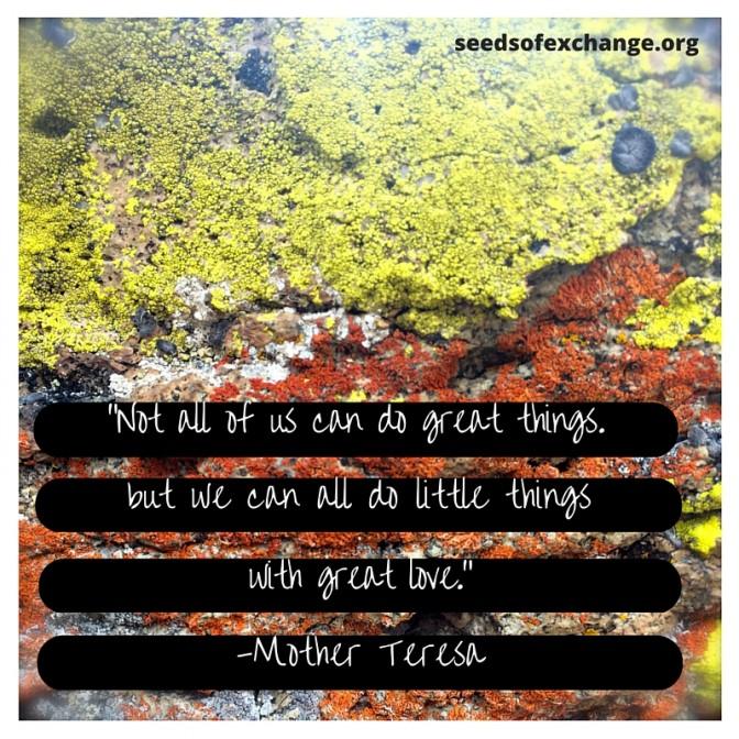 seedlink - small things, great love